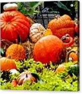 Pumpkin Harvest Acrylic Print by Karen Wiles