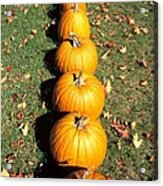 Pumpkins In A Row Acrylic Print by Anonymous