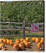 Pumpkins On The Farm Acrylic Print by Joann Vitali