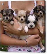 Puppies In Maria's Arms Acrylic Print by John Lautermilch