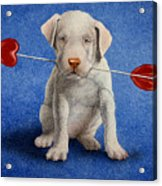 Puppy Lover... Acrylic Print by Will Bullas
