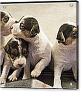 Puppy Row Acrylic Print by Stacy Lynne Photography