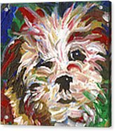 Puppy Spirit 101 Acrylic Print by Linda Mears