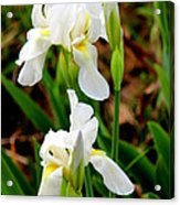 Purity In Pairs Acrylic Print by Kathy  White