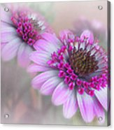 Purple Blooms Acrylic Print by David and Carol Kelly