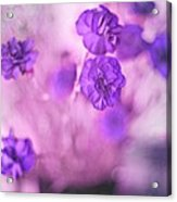 Purple Flowers Acrylic Print by Marisa Horn