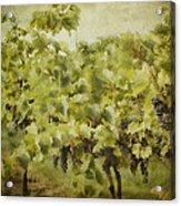 Purple Grapes On The Vine Acrylic Print by Jeff Swanson