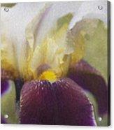 Purple Iris Acrylic Print by Jeff Swanson