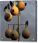 Purple Martin Twilight Acrylic Print by Karen Wiles