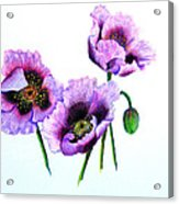 Purple Oriental Poppies Acrylic Print by Karin  Dawn Kelshall- Best