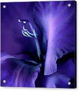 Purple Velvet Gladiolus Flower Acrylic Print by Jennie Marie Schell