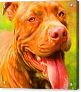 Pit Bull Portrait Acrylic Print by Iain McDonald