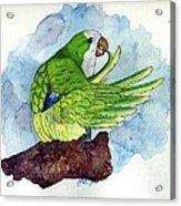 Quaker Parakeet Bird Portrait   Acrylic Print by Olde Time  Mercantile