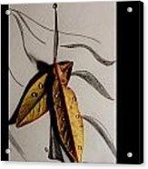 Rain Catcher Acrylic Print by Xoanxo Cespon
