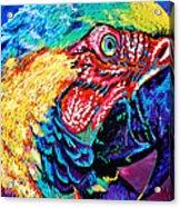 Rainbow Macaw Acrylic Print by Maria Arango