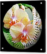 Rainbow Orchids Baseball Square Acrylic Print by Andee Design