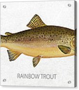 Rainbow Trout Acrylic Print by Aged Pixel