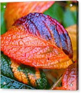 Rainy Day Leaves Acrylic Print by Rona Black