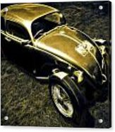 Rat Beetle Acrylic Print by motography aka Phil Clark