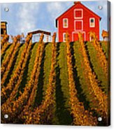 Red Barn In Autumn Vineyards Acrylic Print by Garry Gay
