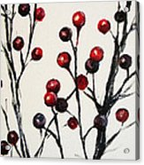 Red Berry Study Acrylic Print by Rebekah Reed