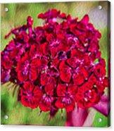 Red Carnations Acrylic Print by Omaste Witkowski