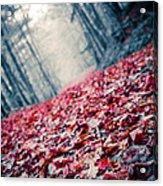 Red Carpet Acrylic Print by Edward Fielding