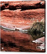 Red Creek Acrylic Print by John Rizzuto
