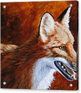 Red Fox - A Warm Day Acrylic Print by Crista Forest