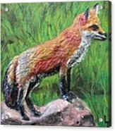 Red Fox Acrylic Print by Lorrie T Dunks