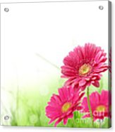 Red Spring Flowers Acrylic Print by Boon Mee