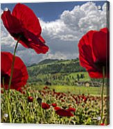Red White And Blue Acrylic Print by Debra and Dave Vanderlaan