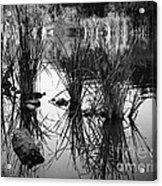 Reeds Acrylic Print by Arne Hansen