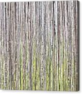 Reeds Background Acrylic Print by Tom Gowanlock