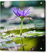 Reflection Of Life Acrylic Print by Charles Dobbs