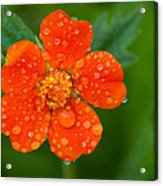 Refreshing Acrylic Print by Matt Dobson