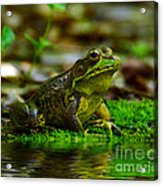 Resting In The Shade Acrylic Print by Kathy Baccari