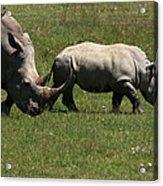Rhinoceros Acrylic Print by Aidan Moran