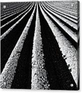 Ridge And Furrow Acrylic Print by Tim Gainey