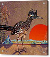 Road Runner At Sundown Acrylic Print by Bob Coonts