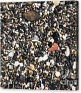 Rocks On The Beach Acrylic Print by Steven Ralser