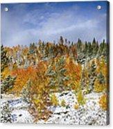 Rocky Mountain Autumn Storm Acrylic Print by James BO  Insogna
