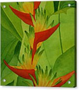 Rojo Sobre Verde Acrylic Print by Diane Cutter
