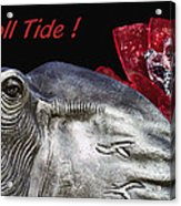 Roll Tide - 14 Time National Champions Acrylic Print by Kathy Clark