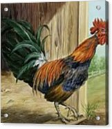 Rooster Acrylic Print by Summer Celeste