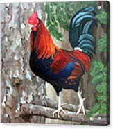 Roscoe The Rooster Acrylic Print by Sandra Chase