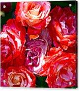 Rose 124 Acrylic Print by Pamela Cooper