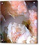 Rose 154 Acrylic Print by Pamela Cooper