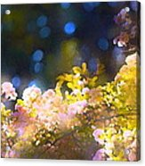 Rose 183 Acrylic Print by Pamela Cooper