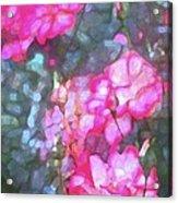Rose 188 Acrylic Print by Pamela Cooper